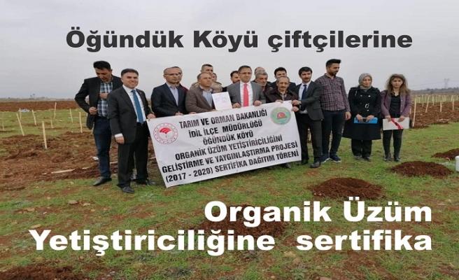 Organik Üzüm Yetiştiriciliğine  sertifika
