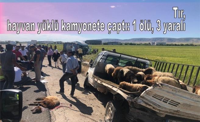 Tır, hayvan yüklü kamyonete çaptı: 1 ölü, 3 yaralı