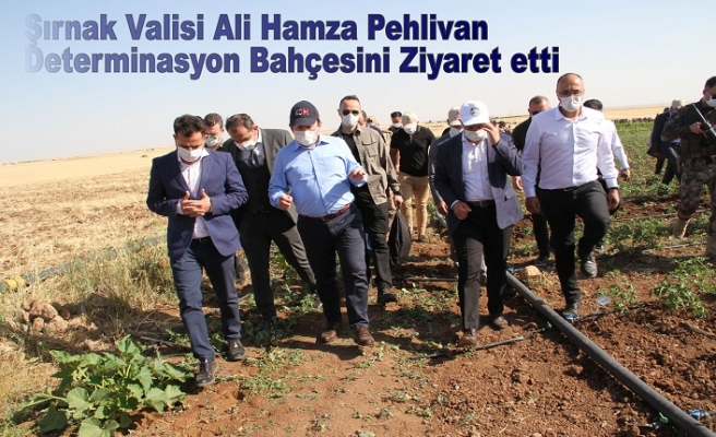 Şırnak Valisi Ali Hamza PEHLİVAN Determinasyon Bahçesini Ziyaret etti.