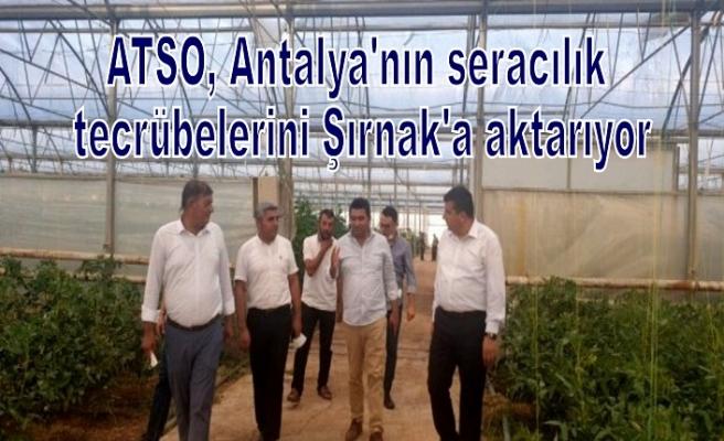 ATSO, Antalya'nın seracılık tecrübelerini Şırnak'a aktarıyor