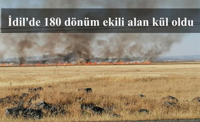 İdil'de 180 dönüm ekili alan kül oldu