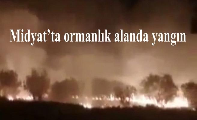 Midyat'ta ormanlık alanda yangın