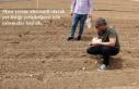 Mısır yerine alternatif olarak yer fıstığı yetiştirilmesi...