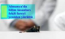 Almanya'da bilim insanları felçli fareyi yeniden yürüttü