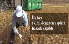 İlk kez ekimi denenen aspirin hasadı yapıldı