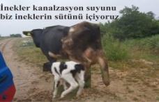 İnekler kanalzasyon suyunu, biz ineklerin sütünü içiyoruz