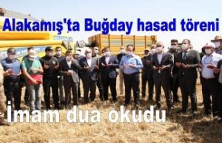 Alakamış'ta Buğday hasad töreni