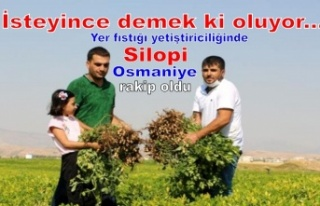 Yer fıstığı yetiştiriciliğinde Osmaniye'ye...