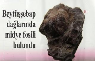 Beytüşşebap dağlarında midye fosili bulundu