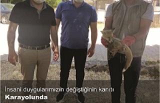 Yolda bulunan Tilki yavrusu korunmaya alındı