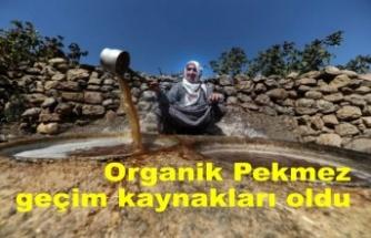 Organik üzümden ürettikleri pekmezler geçim kaynakları oldu