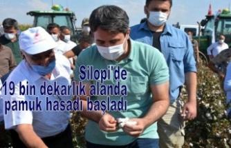 Silopi'de 19 bin dekarlık alanda pamuk hasadı başladı